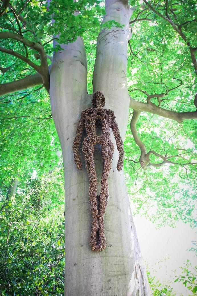 Beech nuts on beech tree. Photographer: Ricky Thakrar